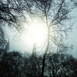 Autumn trees in background of sky and sun — Stock fotografie