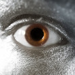 Stock Photo: Brown eyes male closeup