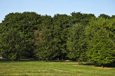 Forest and meadow against the blue sky — Stock Photo