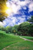 Sunny summer day — Stock Photo