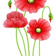 Royalty-Free Stock Vector Image: Red poppy flowers