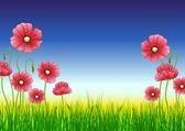 Red poppy flowers — Stock Vector