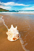 Seashell — Stock Photo