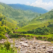 Stock Photo: Rice field terraces