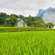 Rice field and waterfall — Stock Photo