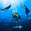 Stock Photo: Diver and mantas