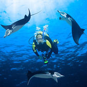 Diver and mantas — Stock Photo