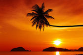 Tropical beach at sunset — Stockfoto