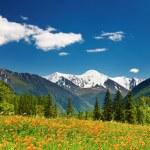Mountain landscape — Stock Photo #3003238