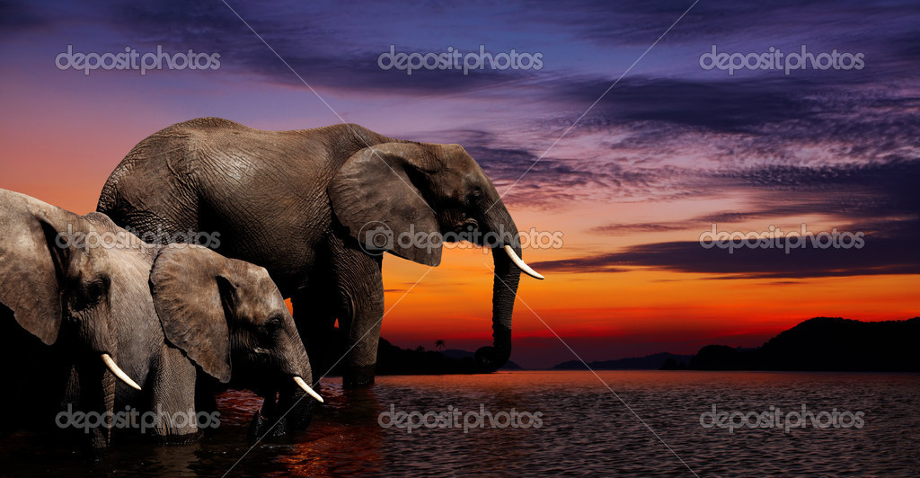 Elephants at watering in african savanna — Stok fotoğraf #3037003