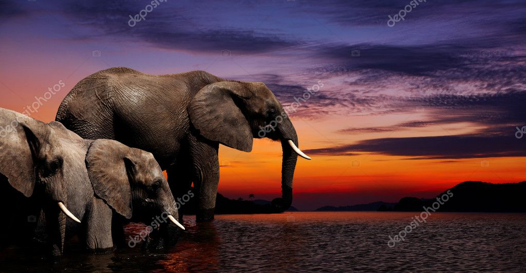Elephants at watering in african savanna — ストック写真 #3037003