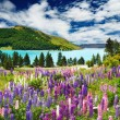 Lake Tekapo, New Zealand - Stock Photo