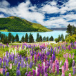 Озеро Текапо, Новая Зеландия — Стоковое фото