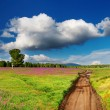 Country road in blossoming field - Stock Photo