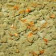 Green mold, seamless texture — Stock Photo