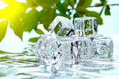 Melting ice cubes — Foto de Stock