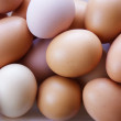 Chicken eggs - Stock Photo