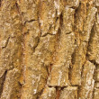 Bark — Stock Photo #2881296