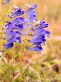 Vent de fleurs — Photo