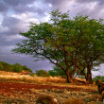 tropikal günbatımı — Stok fotoğraf