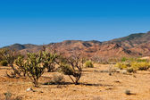 Desert of Arizona — Stock Photo