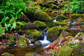 Small creek — Stock Photo