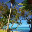 Tropical beach - 