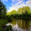 Summer river — Stock Photo #3683068