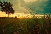 Tramonto nel campo — Foto Stock