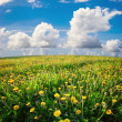 Summer field — Stockfoto