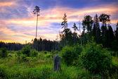 在该字段中的夏季日落 — 图库照片