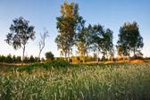 лето поле — Стоковое фото