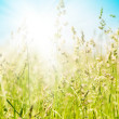 Grass and perfect blue sky — Stock Photo