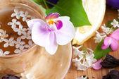 Кубок чай и весной филиал — Стоковое фото