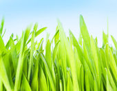 Closeup of the green grass — Stock Photo