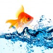 Stock Photo: Gold fish jumping