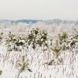 Snowy winter — Stock Photo #2970064