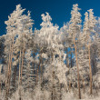 Snowy winter — Stock Photo #2970120