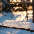 Tree branch with snow — Stock Photo
