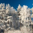 Snowy winter — Stock Photo #2970438
