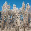 Snowy winter — Stock Photo
