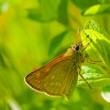 Butterfly on green pant — Stock Photo