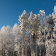 Snowy winter — Stock Photo #2970905