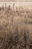 фрост трава крупным планом — Стоковое фото