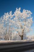 Zimní — Stock fotografie