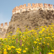 Castle with flowers — Stock Photo