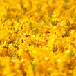 Field flowers — Stock Photo
