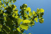 Green leaf on sunlight — Stock Photo