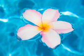 Flower plumer in water — Stock Photo