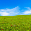 Panorama of green fields — Stock Photo